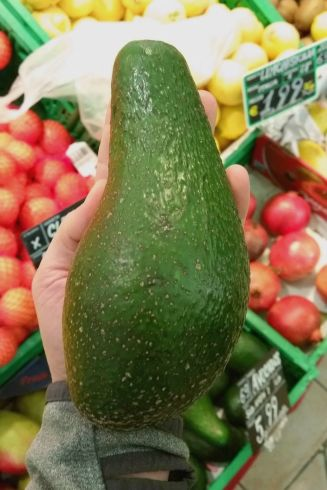 00 stor avocado